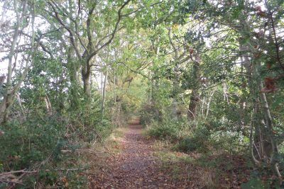 Footpath along the edge of the old Staithe near Stalham