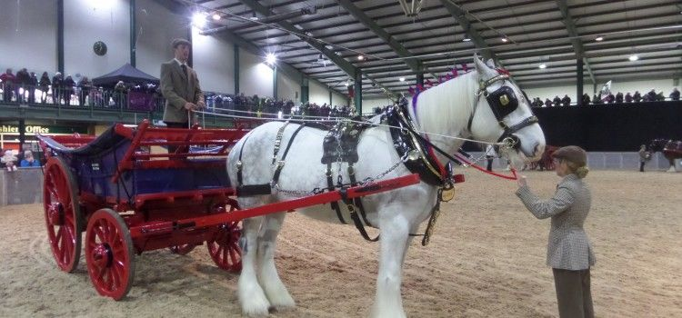 Shire Horse Show – 2